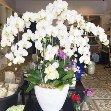 Toko Bunga Di Tangerang Selatan